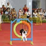 Brasília recebe a maior feira de animais de estimação do país
