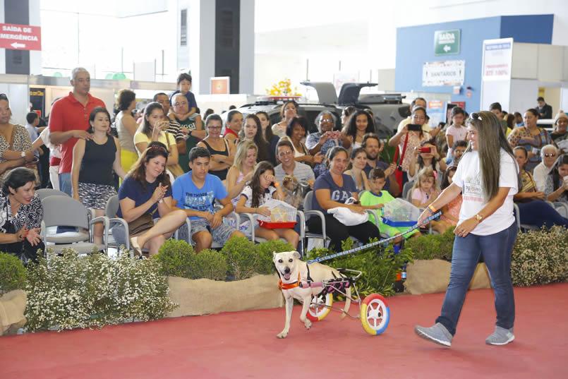 brasiliapetshow1