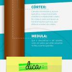 Bepantol® Derma produziu um infográfico explicando a estrutura do fio de Cabelo